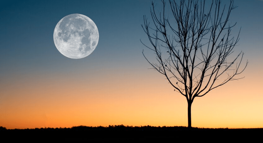 Full Harvest Moon as the sun sets