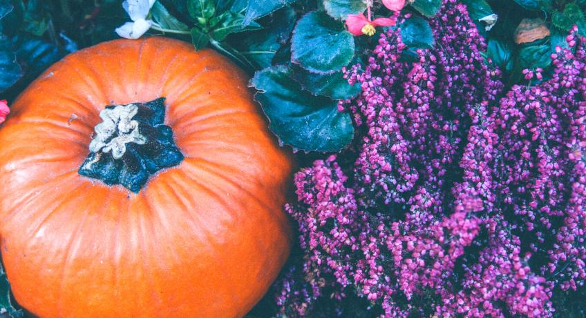 pumpkin & purple flowers