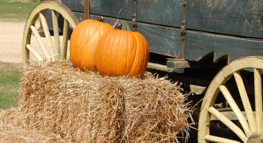 hay and pumpkin along side wagon