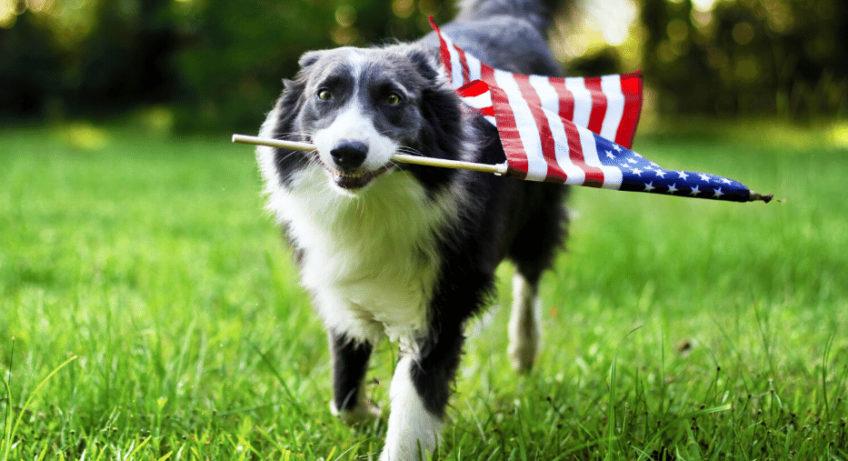 Dog with flag